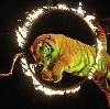 Цирки в Ломоносове