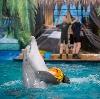 Дельфинарии, океанариумы в Ломоносове