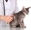 Ветеринарные клиники в Ломоносове